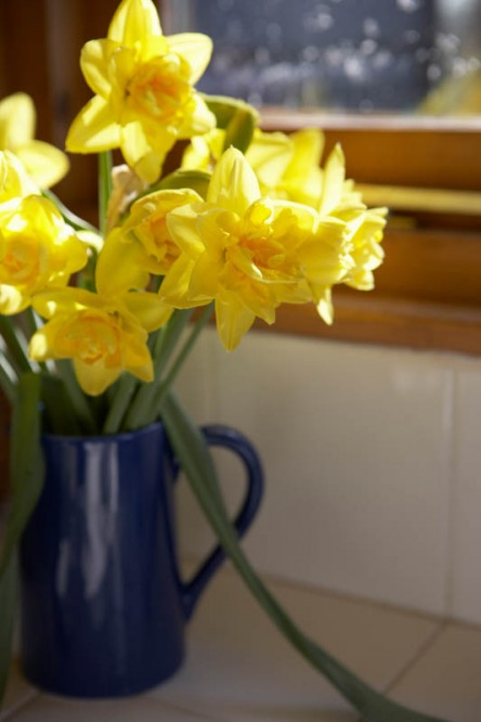 Vase Of Daffodils In Blue Jug On Window Sill