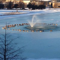lake-fountain-and-geese-in-a-circle